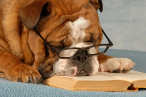 bulldog wearing eyeglasses sleeping over a good novel