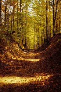 Natchez Trail Through Forest