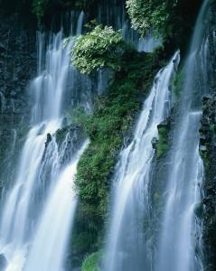 Shiraito Falls Cascading over Vegetation