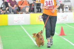 犬バカ10_キャッチ
