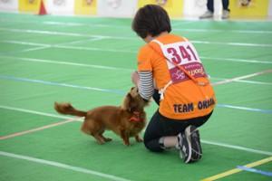 犬バカ10_5