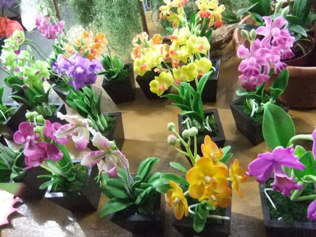 花のフェスティバル
